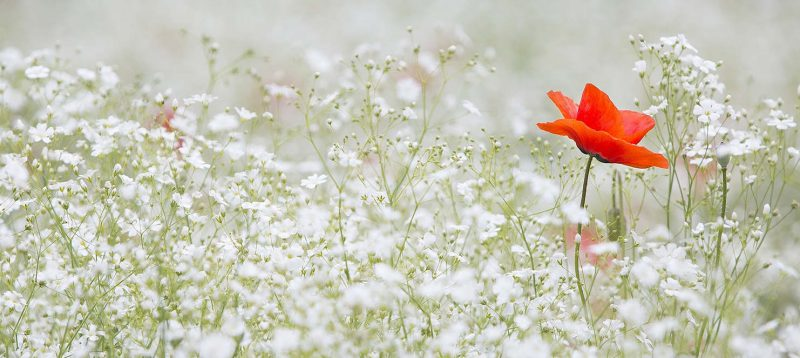 Gartengrundstück Erbschaftsteuer
